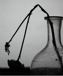 L'elaborazione del lutto: perdere un affetto e preservare un ricordo