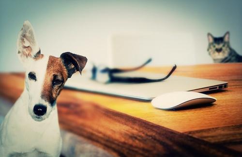 Psicologia e animali domestici