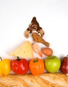 Counseling nutrizionale: la salute vien mangiando