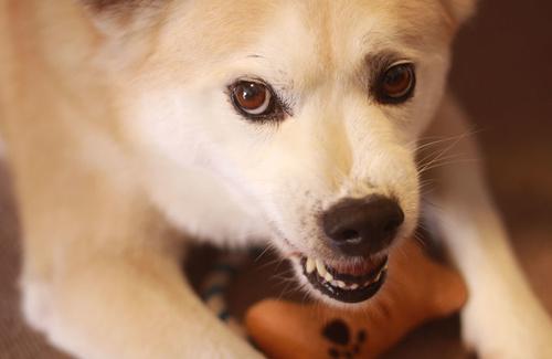 Cinofobia: se un cane non è più soltanto un cane