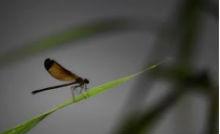 La fobia degli insetti