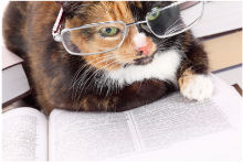 L'angoscia per Freud: eros, thanatos e il gatto che si morde la coda